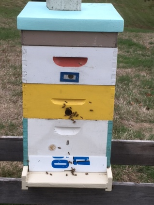 Hive winner